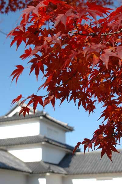 2008初冬の彦根城_c0093196_9471817.jpg