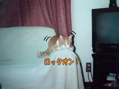 f0187700_1321262.jpg