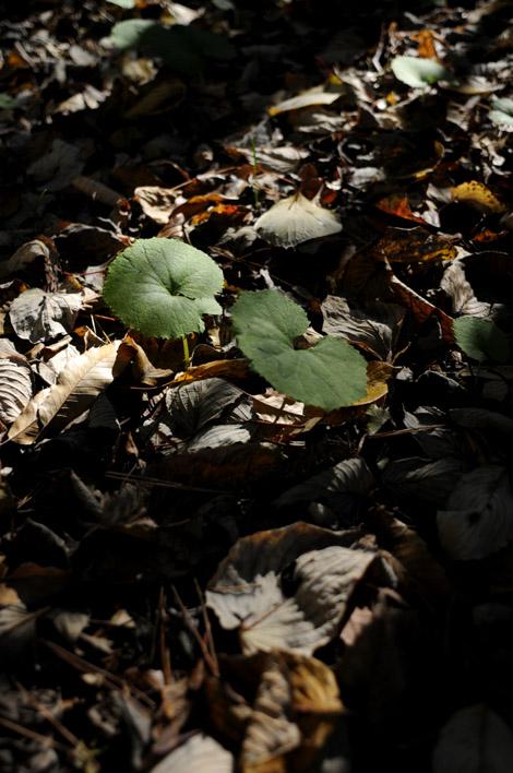 葉っぱととんかつ_b0133509_0571994.jpg