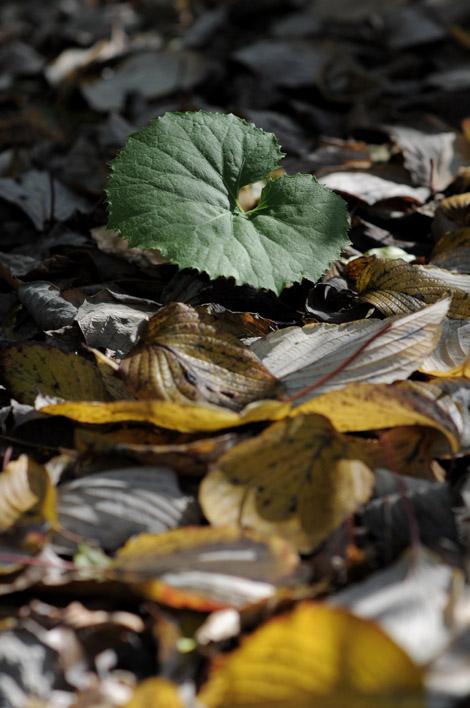 葉っぱととんかつ_b0133509_0573258.jpg