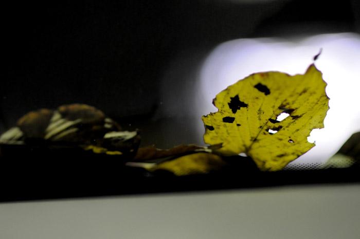 葉っぱととんかつ_b0133509_141833.jpg