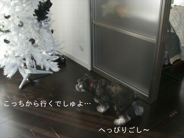 f0197317_1548111.jpg