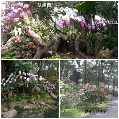 チェンマイ観光_a0084343_14381937.jpg