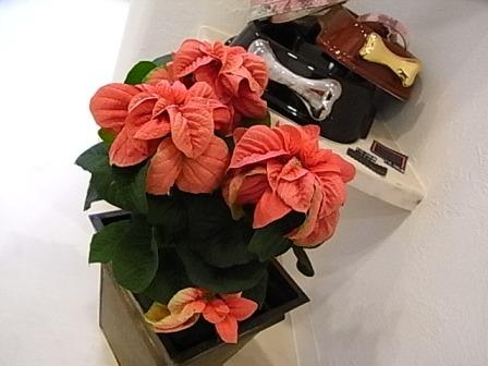 今朝、お花屋さんへ行きました♪_e0087043_17195573.jpg