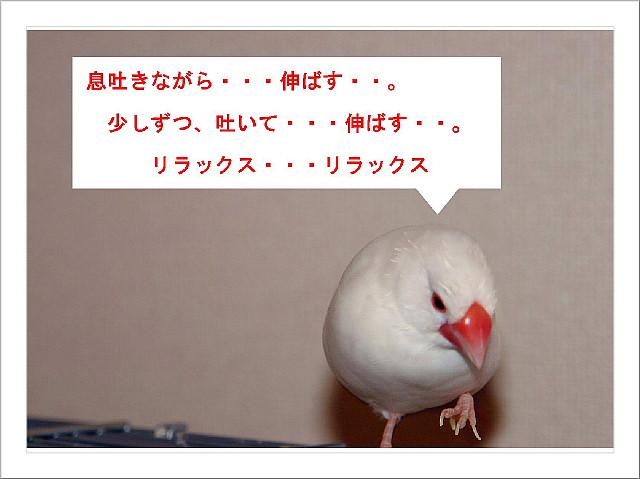 a0019545_17364236.jpg