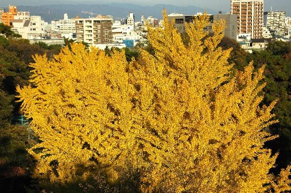 和歌山城公園にて_b0093754_0152281.jpg