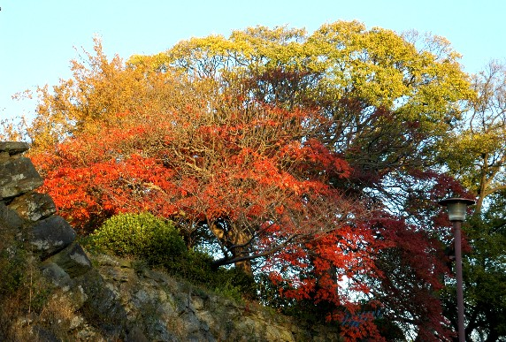 和歌山城公園にて_b0093754_23413256.jpg