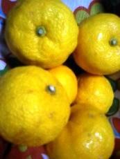 柚子で化粧水を作るゾ!_a0033474_558252.jpg
