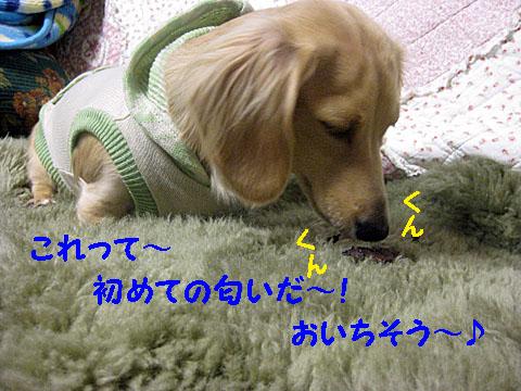 c0108112_2011537.jpg