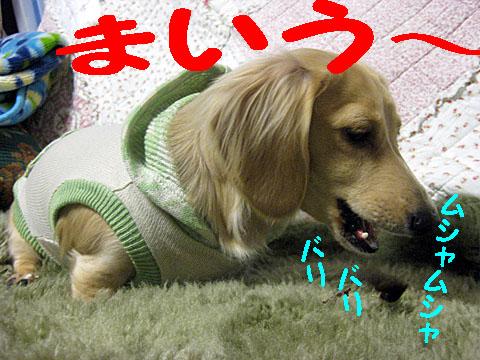 c0108112_2013762.jpg