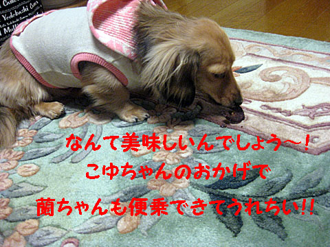 c0108112_2015962.jpg