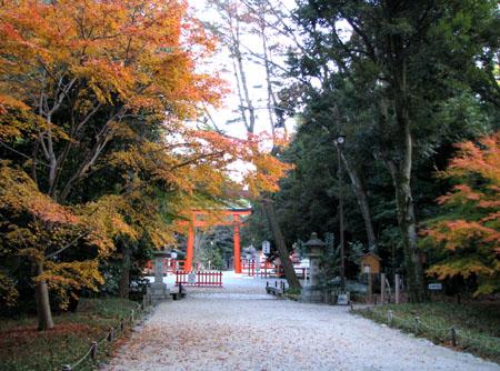 紅葉の下鴨神社と「糺の森」_e0048413_21464979.jpg