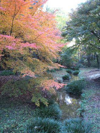 紅葉の下鴨神社と「糺の森」_e0048413_21472639.jpg