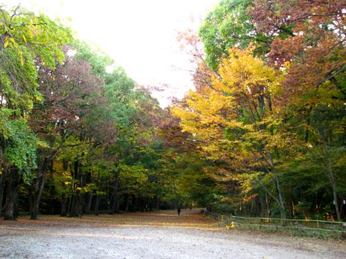 紅葉の下鴨神社と「糺の森」_e0048413_21564877.jpg