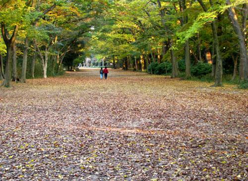 紅葉の下鴨神社と「糺の森」_e0048413_2157886.jpg