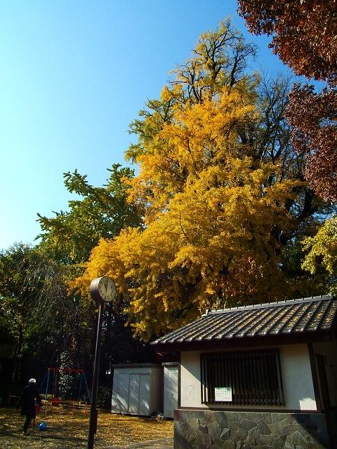 鬼子母神堂前の公園の紅葉_e0089232_132328.jpg