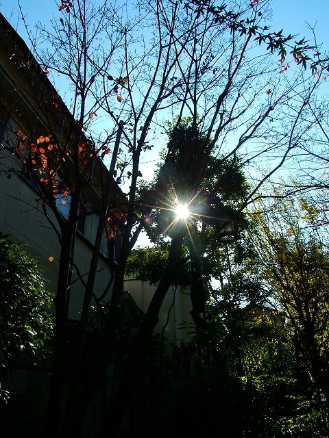鬼子母神堂前の公園の紅葉_e0089232_142138.jpg