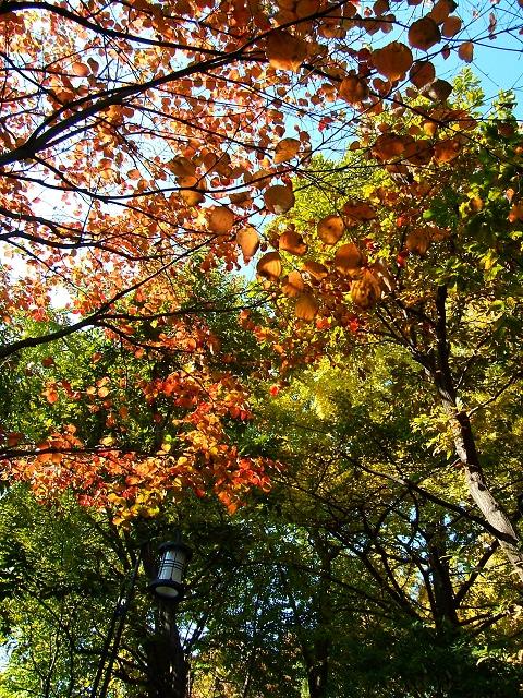 鬼子母神堂前の公園の紅葉_e0089232_182673.jpg