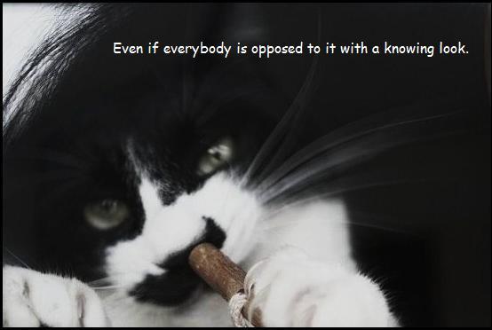 meow_e0126350_221866.jpg
