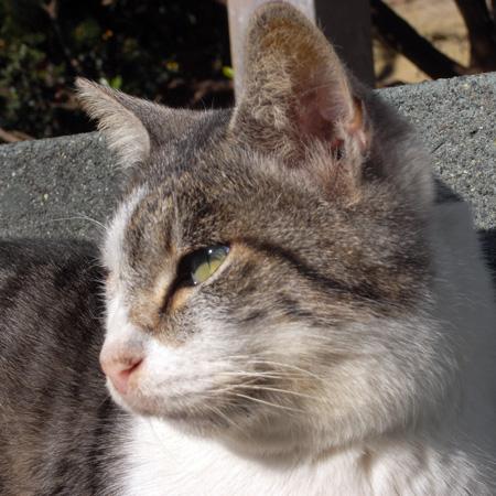 江ノ島の猫の横顔_f0117059_20341378.jpg