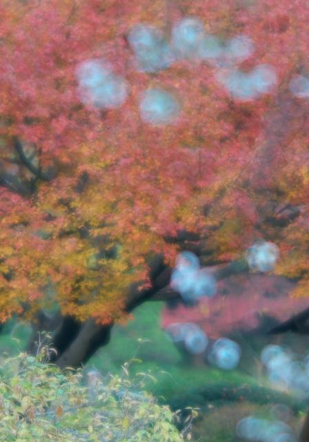 冬桜_f0018464_18211381.jpg
