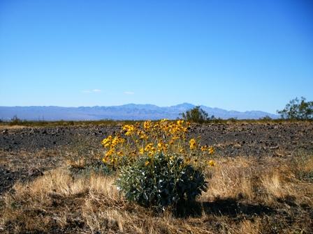 2006 モハベ砂漠への旅_e0141978_2452264.jpg