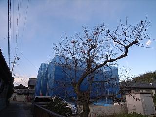 柿の実_f0059988_17151834.jpg