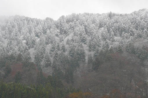 雪の降り始めと来年の仕事_e0054299_1423492.jpg