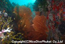 シミラン諸島 NO.9 ノースポイント_e0162203_16565979.jpg