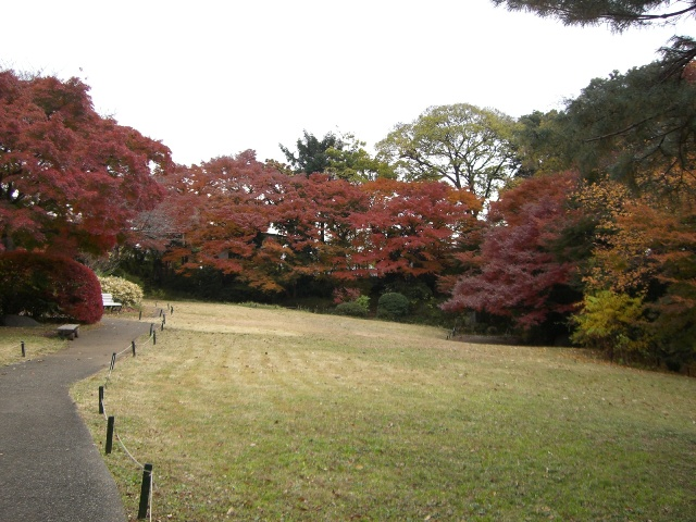 紅葉が見ごろです!_b0049307_0392599.jpg
