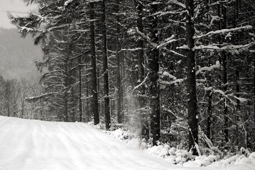 再び冬_c0033513_17321277.jpg