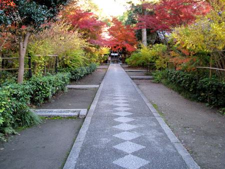 梨の木神社 紅葉の盛り_e0048413_21114782.jpg