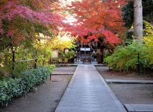 梨の木神社 紅葉の盛り_e0048413_21115989.jpg