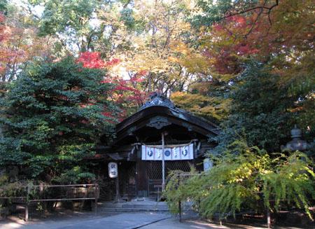 梨の木神社 紅葉の盛り_e0048413_21123387.jpg