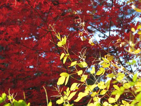 梨の木神社 紅葉の盛り_e0048413_21124689.jpg