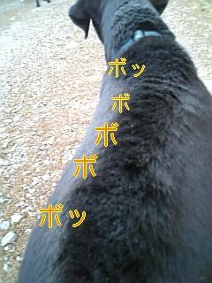 f0148927_1962989.jpg