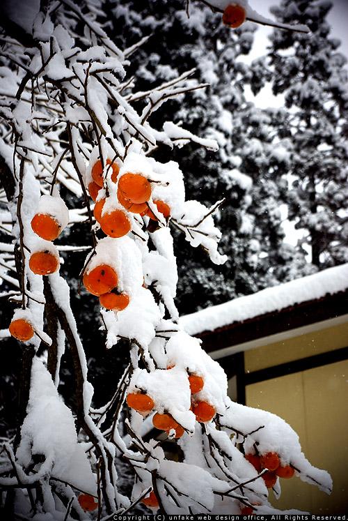 雪化粧_c0176838_12181776.jpg