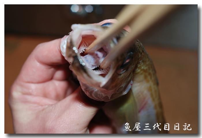 魚の捌き方「つぼ抜き」です......... ハタハタ(鰰)を捌いてみました!_d0069838_18443958.jpg