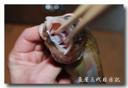 魚の捌き方「つぼ抜き」です......... ハタハタ(鰰)を捌いてみました!_d0069838_18462740.jpg