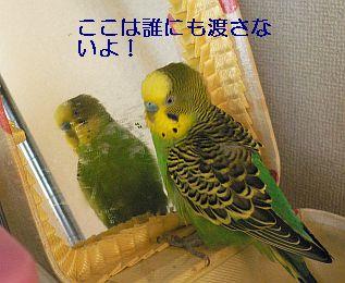 f0196665_0221261.jpg