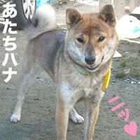 ハナちゃんと伊佐蔵_b0057675_151493.jpg