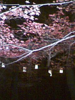 武蔵丘陵森林公園_e0013178_2034423.jpg