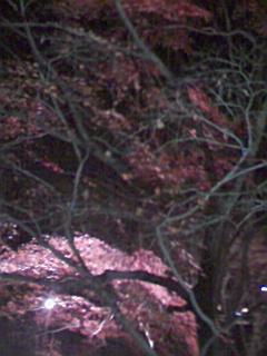 武蔵丘陵森林公園_e0013178_2034452.jpg