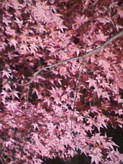 武蔵丘陵森林公園_e0013178_2034498.jpg