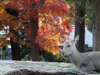 鹿と紅葉_b0008289_207080.jpg
