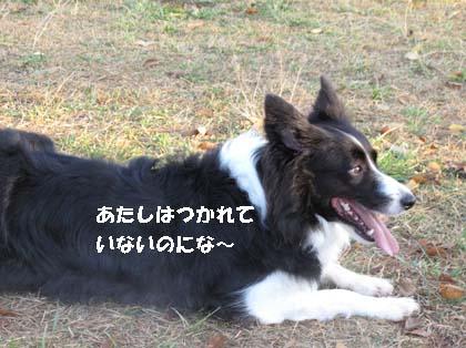 f0114893_17401735.jpg