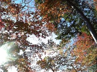 鎌倉の紅葉_f0116297_2215334.jpg