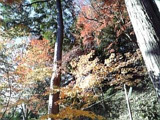 鎌倉の紅葉_f0116297_226143.jpg
