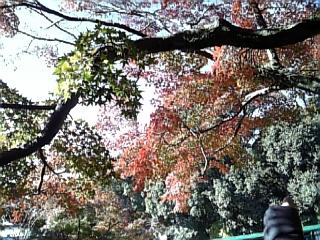 鎌倉の紅葉_f0116297_2262155.jpg