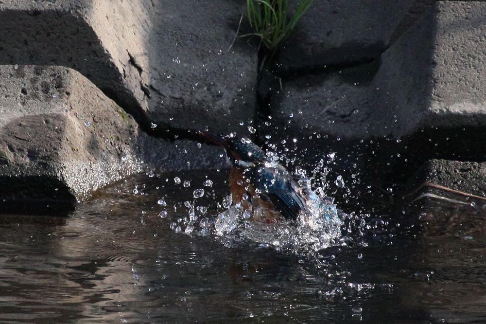 ただの水浴びです/富士山とDY_b0024798_65339.jpg
